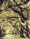 Trees in downtown of Savannah Royalty Free Stock Photos