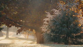 Trees In Dramatic Morning Sunlight In The Park stock footage