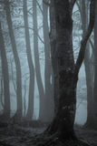 Trees drenched by fog Stock Photography