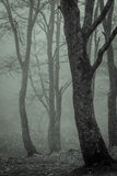 Trees drenched by fog, tonality Royalty Free Stock Photo