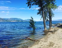 Trees and driftwood along lake shore Royalty Free Stock Images
