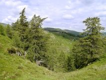 Trees with drop between, Lake District. From Glenridding Dodd looking to Glencoyne valley royalty free stock photos