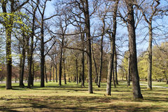 Trees in Drottningholm Palace Garden Stock Image