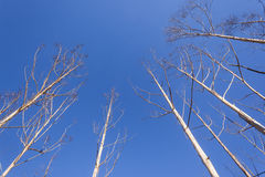 Trees Drought Blue Sky Stock Images