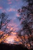 Trees with dry branches and leaves against the fiery sunset in t. He forest. Cloudy sky Stock Photography