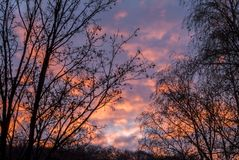 Trees with dry branches and leaves against the fiery sunset in t. He forest Royalty Free Stock Photo