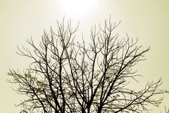 Trees dry winter of Thailand Royalty Free Stock Images