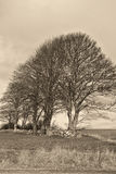 Trees at a Drystone Wall Stock Images