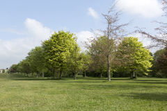 Trees on Durdham Downs, Bristol Stock Photography