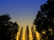 Trees at dusk Stock Images