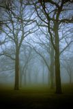 Trees at Dusk. A forest of bare trees in dense fog and mist Royalty Free Stock Image