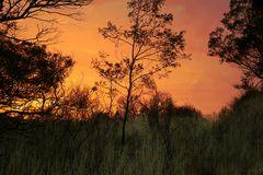 Trees in Dusk Stock Photography