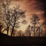 Trees at dusk. Silhouettes of trees at dusk. Dramatic sky. Horror environment Royalty Free Stock Images