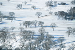 Trees and the earth covered with snow Stock Images