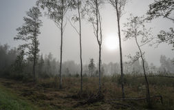 Trees on the edge of a bog against the distant wood in fog stock photography