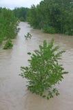 Trees of Elm and Hazel immersed in mud overflown river wat Royalty Free Stock Image