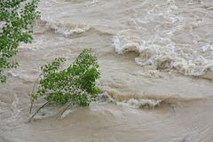 Trees of Elm and Hazel immersed in mud overflown river wat royalty free stock images