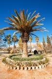Trees in Eram garden. Stock Images