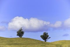 The trees and the erath. An incredible landscape. In Easter Island, Chile Royalty Free Stock Photo