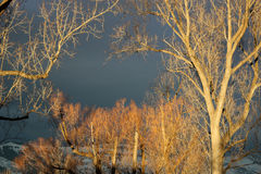 Trees in evening light Stock Photos