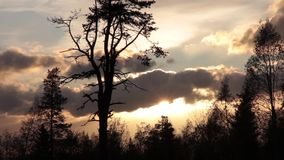 Trees and evening sky stock video footage