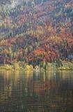 trees för äng för höstbjörkleaves orange Royaltyfri Fotografi