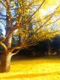 trees för äng för höstbjörkleaves orange Arkivbild