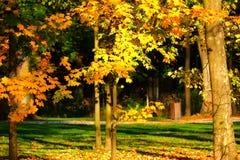 trees för äng för höstbjörkleaves orange Arkivfoton