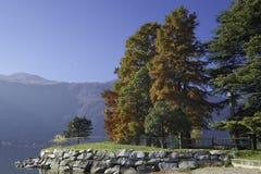 trees för äng för höstbjörkleaves orange Arkivbilder