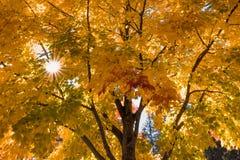 trees för äng för höstbjörkleaves orange Fotografering för Bildbyråer