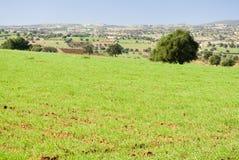 trees för arganfältgreen Arkivbild