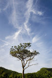 trees för blå sky Arkivbilder
