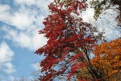 trees för blå sky för höst Arkivbilder