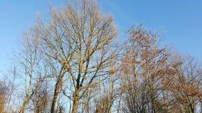 trees för blå sky för höst Royaltyfria Foton