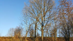 trees för blå sky för höst Fotografering för Bildbyråer