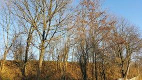 trees för blå sky för höst Royaltyfri Foto