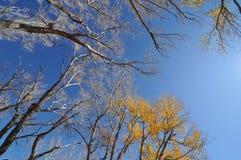 trees för blå sky för höst oisolerade Arkivfoto