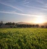 trees för fältgrässolnedgång Royaltyfria Bilder
