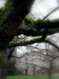 trees för fjäder för fältängplats royaltyfri fotografi