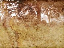 trees för fjärdclearingtextur arkivfoto