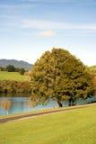 trees för flod för höstliggandeäng Royaltyfri Bild