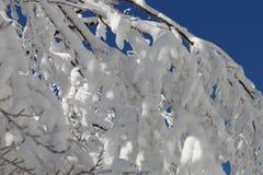 26 trees för format för sammansatt digital enorm mpix panorama- sköt snöig Arkivfoton
