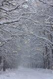 26 trees för format för sammansatt digital enorm mpix panorama- sköt snöig Royaltyfria Foton