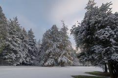 26 trees för format för sammansatt digital enorm mpix panorama- sköt snöig Arkivfoto