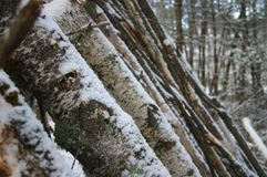 26 trees för format för sammansatt digital enorm mpix panorama- sköt snöig Royaltyfri Bild