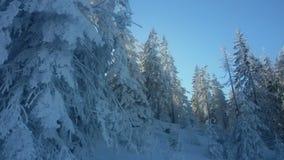 26 trees för format för sammansatt digital enorm mpix panorama- sköt snöig Arkivbilder