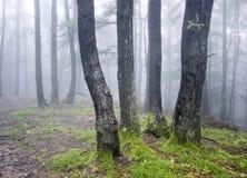 trees för grupp för green för dimmaskoggräs Arkivfoto