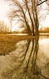 trees för gruppflodfjäder Fotografering för Bildbyråer
