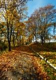 trees för höstlönnpark Royaltyfri Fotografi