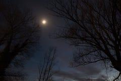 trees för halloween moonnatt Royaltyfri Bild